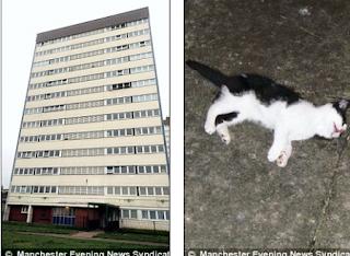 Stacey Ravenall  arrojó un gatito desde el piso 11