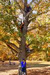 Cooper Family Tree