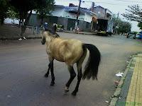 Caballo en una calle de Asunción