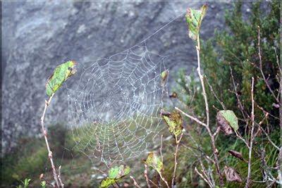 Tela de araña en la niebla
