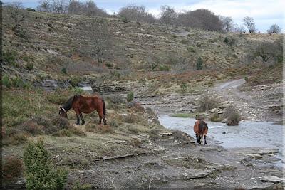 Pastando junto al río