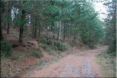Agradable paseo por el pinar
