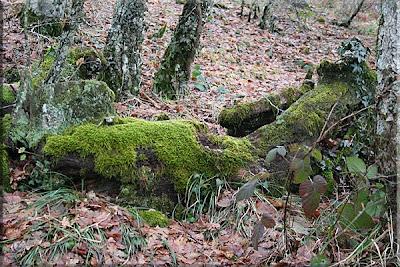 ... en el bosque no hay belleza muerta.... hay continuidad de vida