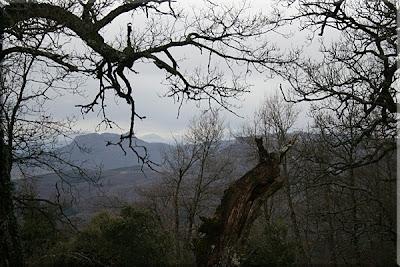 Peña de Lapoblazion entre el ramaje