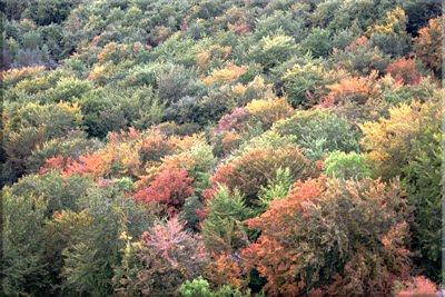 La belleza del bosque al llegar el otoño