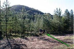 Cruzamos la pista hacia el pinar