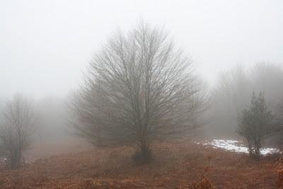 Desnuda haya surge de entre la niebla