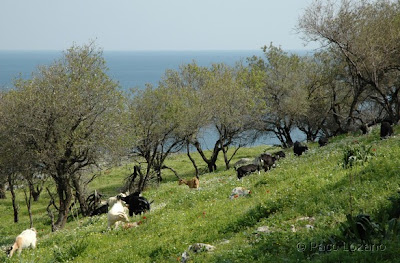 Lindos (Rhodes, Greece)