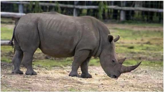 Ze Rhino