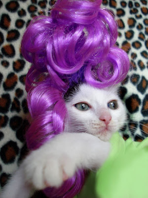 Komik Pet Kedi peruk - 32Pics