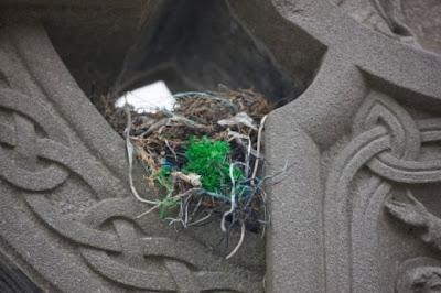عجیب ترین مکان هایی که پرندگان لانه کردند! عکس