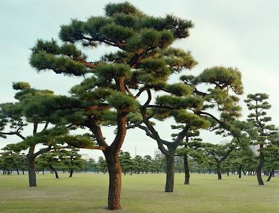 أجمل وأغرب الأشجار إطلاقا
