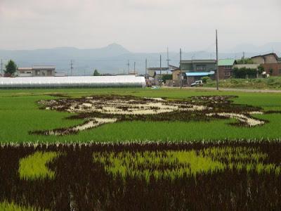 عکس: مزرعه آرایی