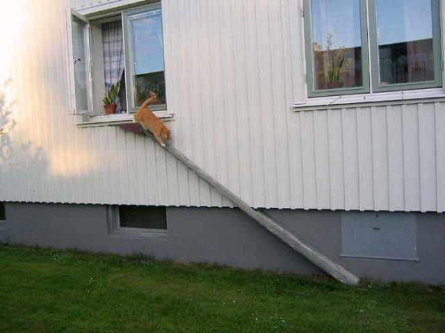 cat ladders 08 - cats ladder