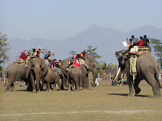 International Game, Elephant Polo in Nepal