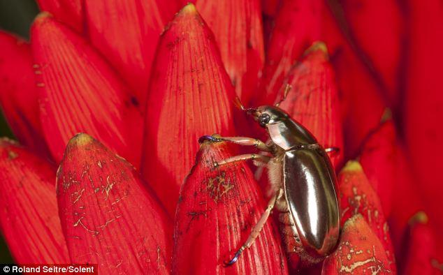 http://3.bp.blogspot.com/_IXf0E5loqR8/TMEuJPuGwhI/AAAAAAAAAJg/qdGak0hu95o/s1600/kumbang-unik.jpg