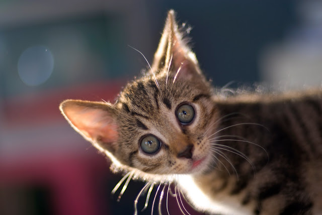 Crazy Kitten? // Nikkor 50mm 1.4 by Merlijn Hoek from flickr (CC-NC-ND)