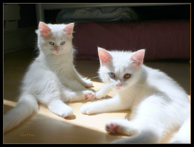 Bohu & Tohu  (3 months old) by Gattou/Lucie from flickr (CC-SA)