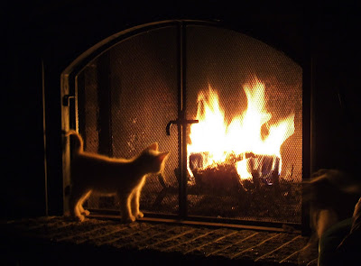 Cat and fire by Michel Filion from flickr (CC-BY)