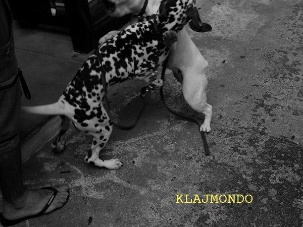 klajmondo