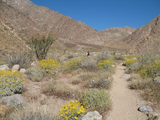 The alternate trail to Palm Canyon in Anza-Borrego Desert State Park