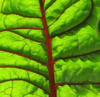 Swiss Chard Leaf Pattern