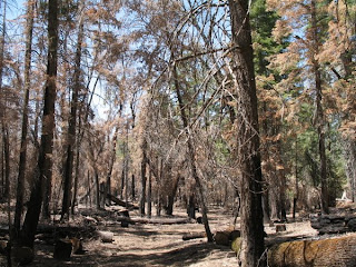Last year's Palomar Mountain fire burned acres in this area.