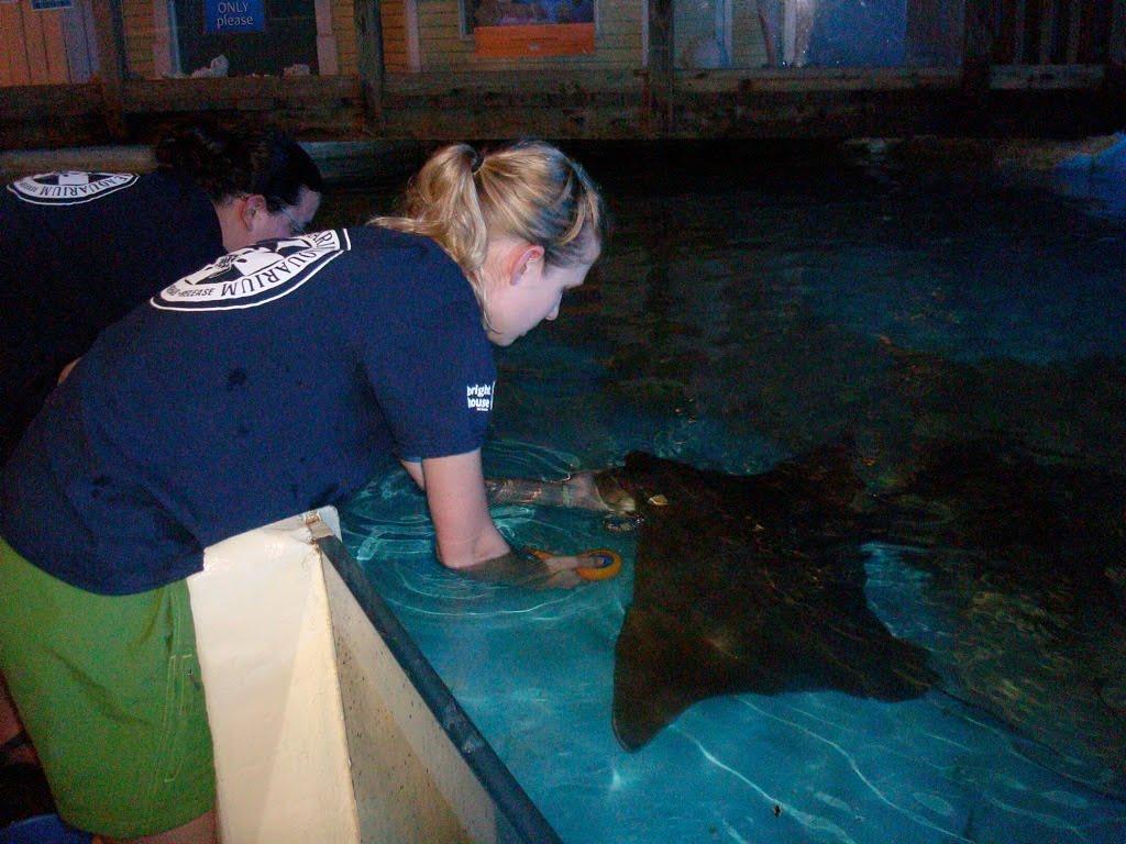Clearwater Marine Aquarium Internship