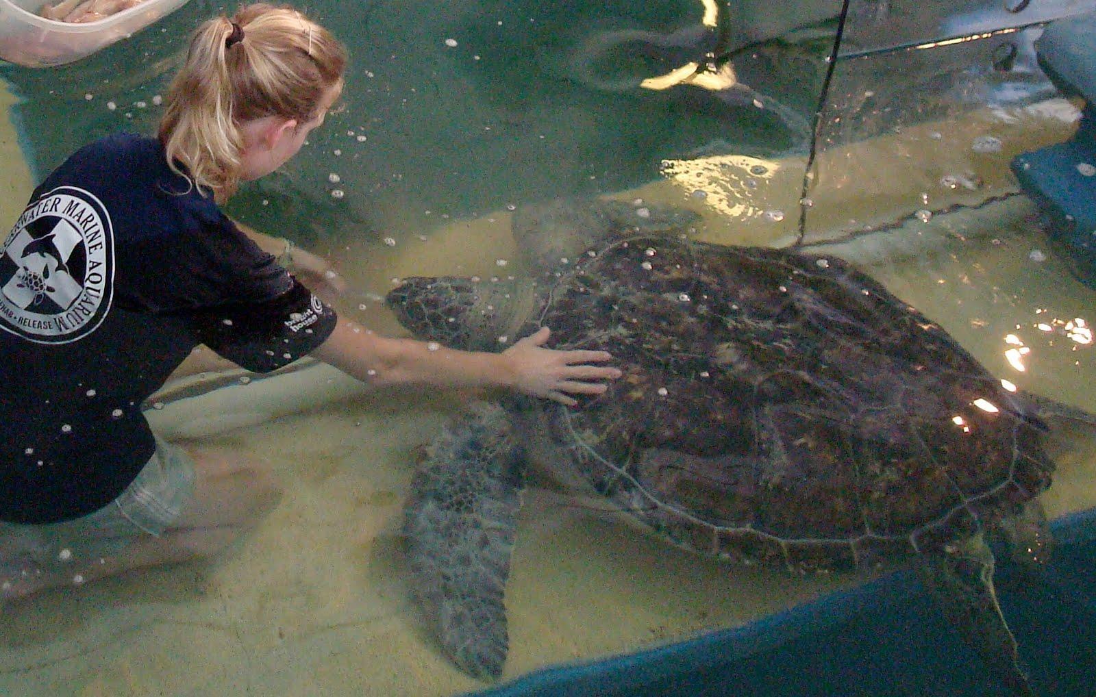 Clearwater Marine Aquarium Internship Going On Week 4