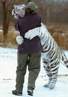 http://3.bp.blogspot.com/_IaEzRW041qo/TMMzB8Bre2I/AAAAAAAAAEQ/dBT5c1NAViI/s320/Tigre+branco.jpg