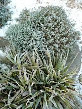 Frozen garden (front garden)