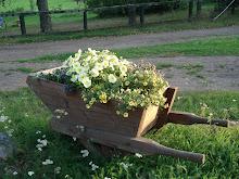 Blommor i en gammal skottkärra 2009