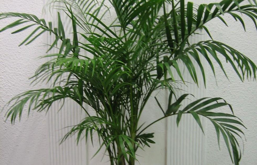 Del rbol plantas que purifican el aire - Como cuidar una hortensia de exterior ...