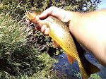 Portneuf Cutthroat