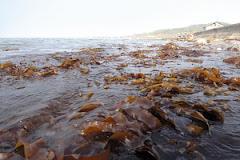 海の森再生プロジェクト