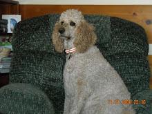 Taryn's family's dog