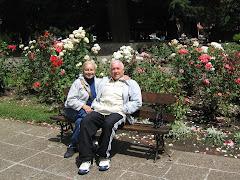 Las Rosas de San Martín de los Andes