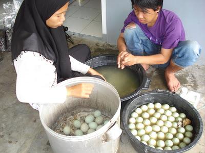 proses pembuatan telur asin tek m bio pembuatan telur per 100 butir