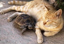 Coexisting - even animals can do it!