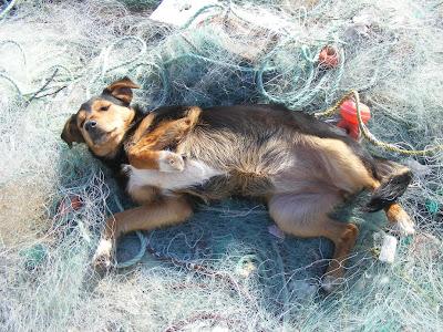 Cadelinha no porto de abrigo de Sesimbra