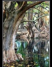 bosque y pantano