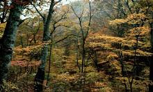 bosques de caducifolios japones