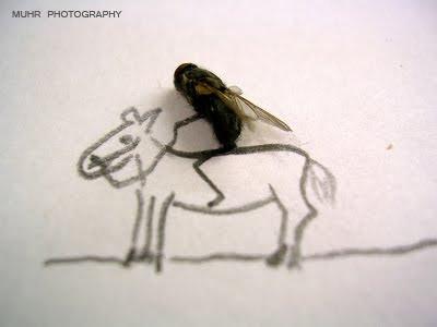 Fotografia com insetos mortos