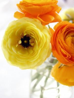 Coleções: Amarelo