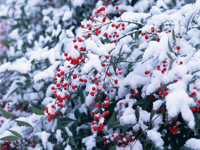 Uh ru первый снег