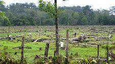 Desflorestação na Costa Rica