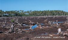 Desflorestação