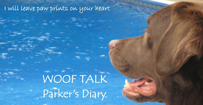 Woof Talk