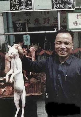 http://3.bp.blogspot.com/_Ipev-TDF12o/S6kay3ecA_I/AAAAAAAAAqA/dHwsnVPEpVQ/s400/cat.jpg