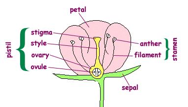 Plant Parts Flower